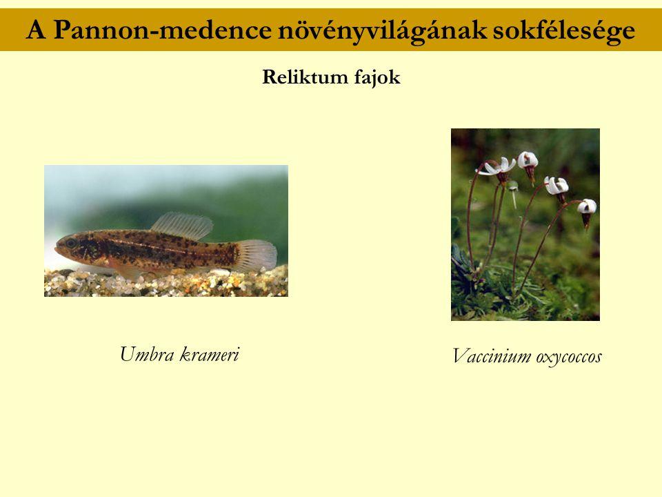 A Pannon-medence növényvilágának sokfélesége Reliktum fajok Vaccinium oxycoccos Umbra krameri