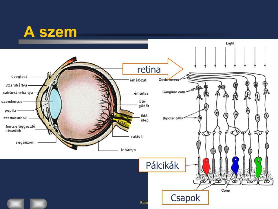 Kommunikációs Rendszerek A látás A szaruhártya és a szemlencse rávetíti a külvilág képét a retinára A retina a szem belső felszínét borító vékony idegszöveti réteg.