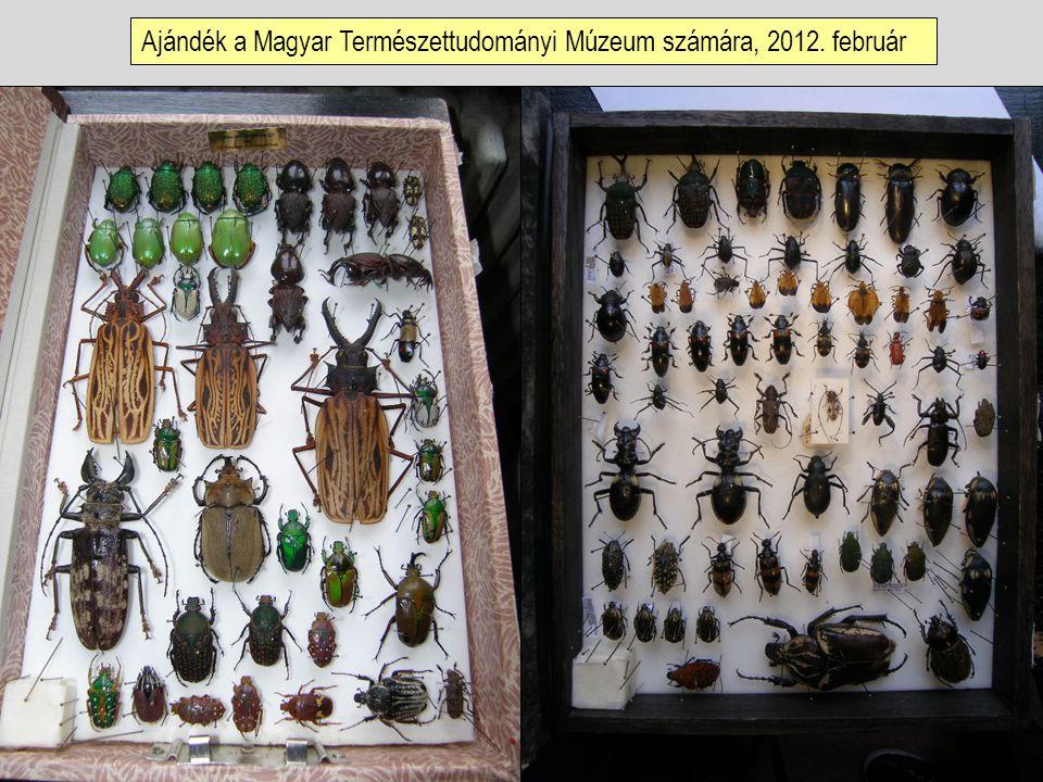 Ajándék a Magyar Természettudományi Múzeum számára, 2012. február