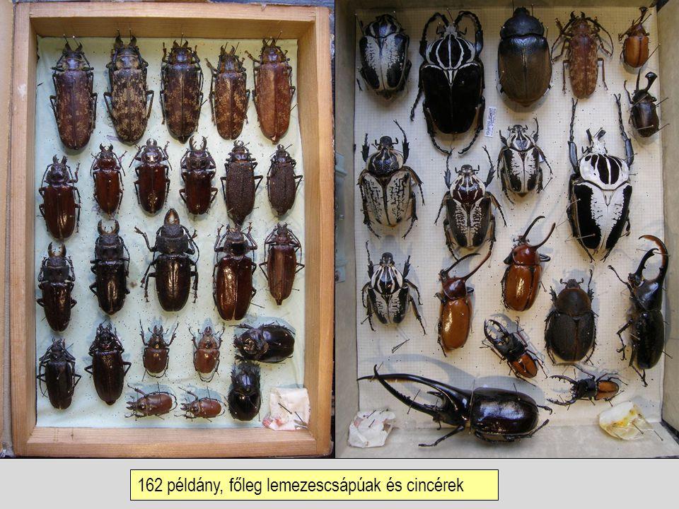 162 példány, főleg lemezescsápúak és cincérek