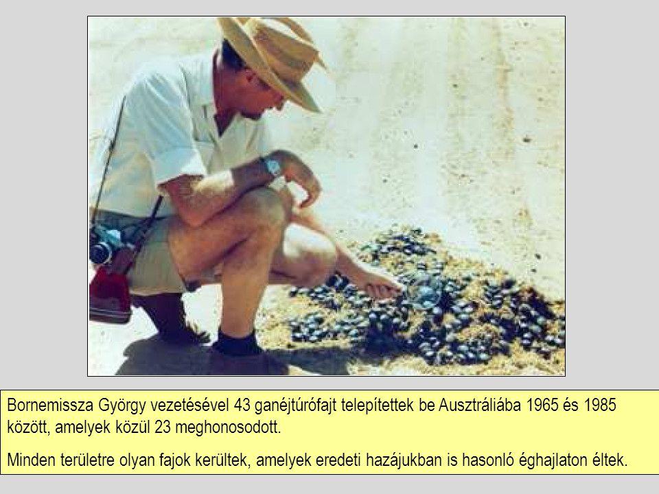 Bornemissza György vezetésével 43 ganéjtúrófajt telepítettek be Ausztráliába 1965 és 1985 között, amelyek közül 23 meghonosodott. Minden területre oly