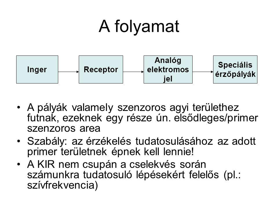 Biológiai oldal A szervezet érzőrendszerei: –Külvilág Távol - telereceptorok (pl.: látás, hallás) Közvetlen érintkezés – exteroceptorok (pl.: tapintás