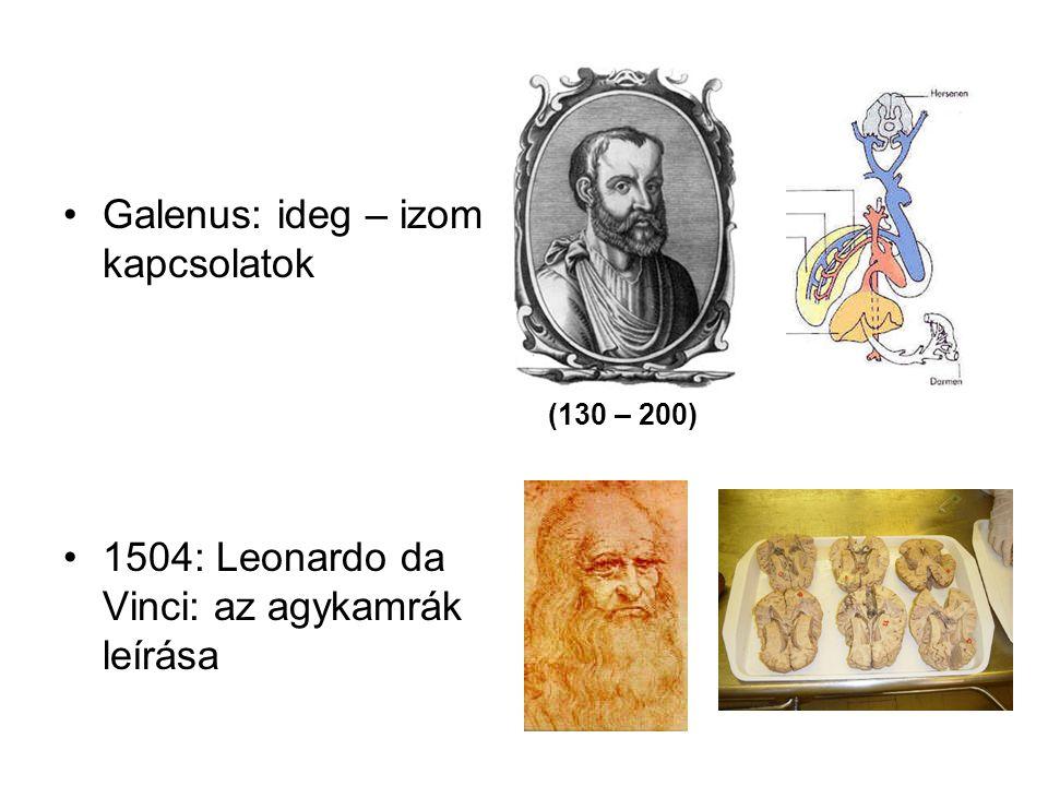 Galenus: ideg – izom kapcsolatok 1504: Leonardo da Vinci: az agykamrák leírása (130 – 200)