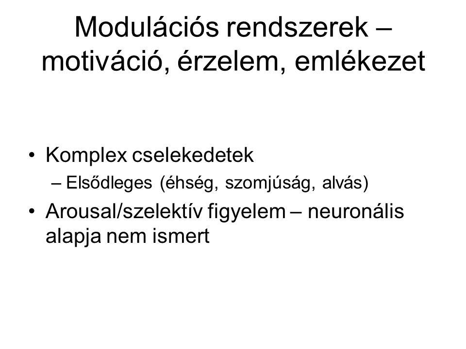 BG, HC, amygdala Bazális Ganglionok nucl. Caudatus, putamen, globus pallidus neuronjai regulálják a mozgást, skill-ek tanulásában játszik szerepet inp