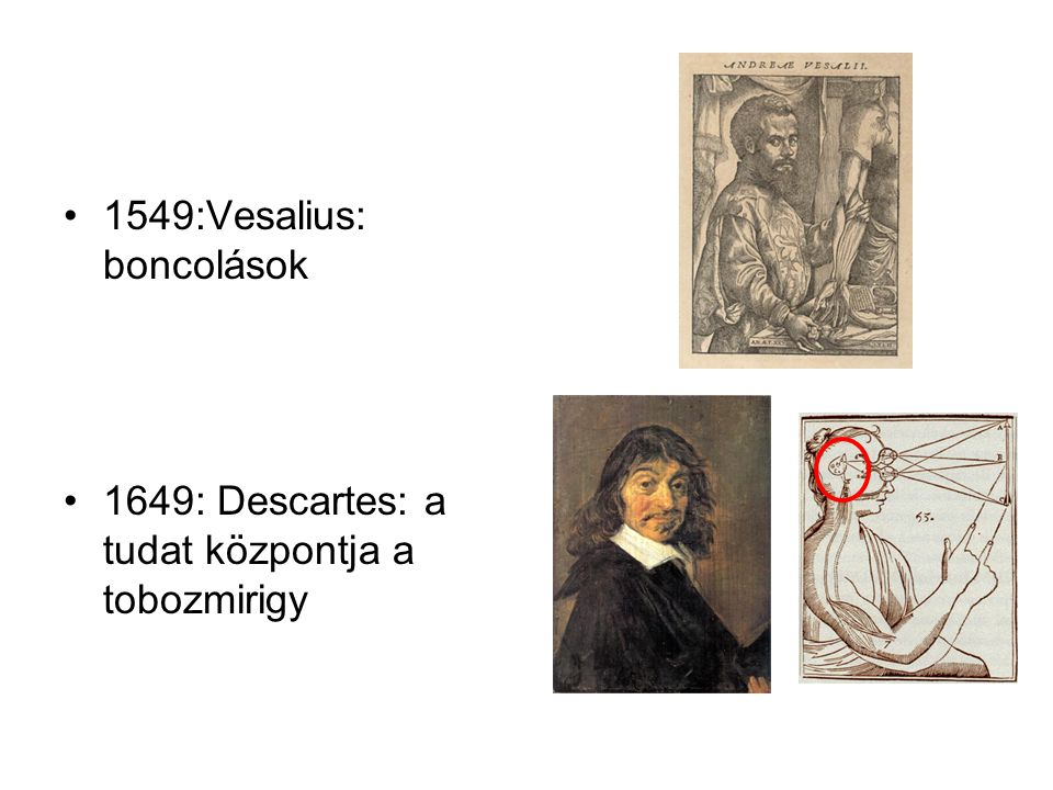 1549:Vesalius: boncolások 1649: Descartes: a tudat központja a tobozmirigy