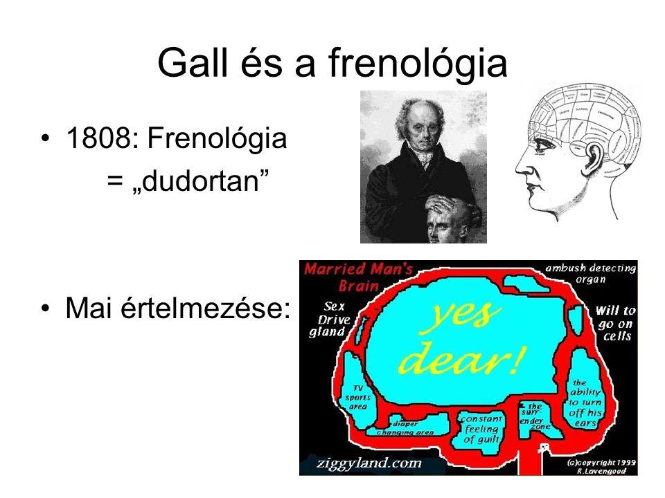 Agyféltekék (telencephalon) A legnagyobb rész Kéreg (szürkeállomány) és alatta fehérállomány három mélyebb struktúra: BG, amygdala, hippocampus perceptuális, motoros, kognitív funkciók – emlékezés, érzelmek kettő kapcsolata: corpus callosum amygdala: szociális viselkedés, érzelemkifejezés, FÉLELEM hippocampus: memória (LTM) Bazális ganglionok: finommozgások kontrollja
