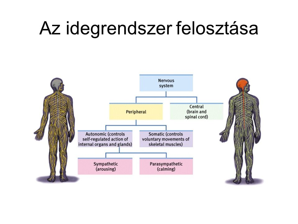 Anatomical (MRI) image Functional (fMRI) images based on blood oxygen levels ~ neural activation fMRI Images