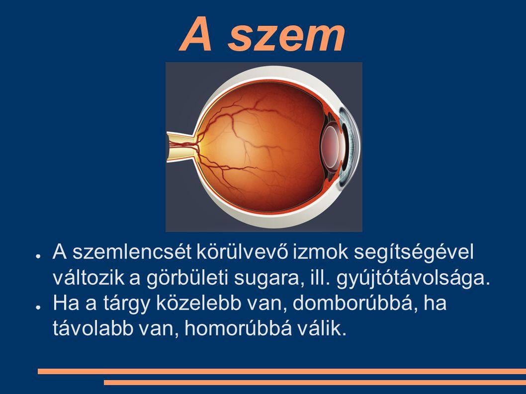 A szem ● A szemlencsét körülvevő izmok segítségével változik a görbületi sugara, ill. gyújtótávolsága. ● Ha a tárgy közelebb van, domborúbbá, ha távol