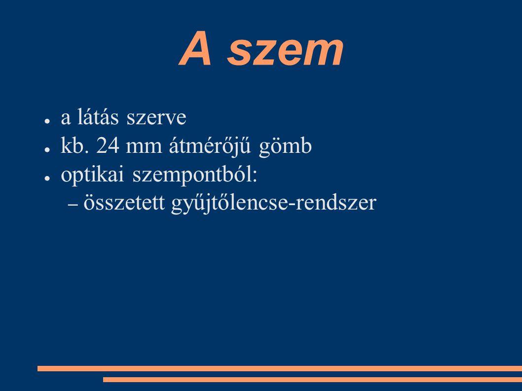 ● a látás szerve ● kb. 24 mm átmérőjű gömb ● optikai szempontból: – összetett gyűjtőlencse-rendszer