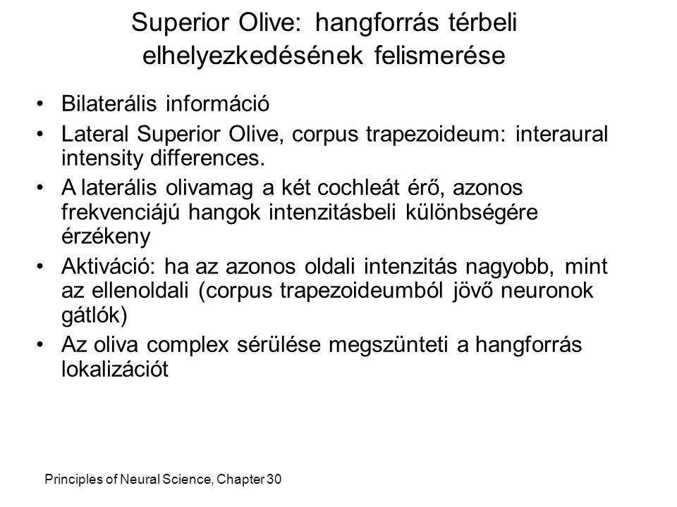 Superior Olive: hangforrás térbeli elhelyezkedésének felismerése Principles of Neural Science, Chapter 30 Bilaterális információ Lateral Superior Oliv