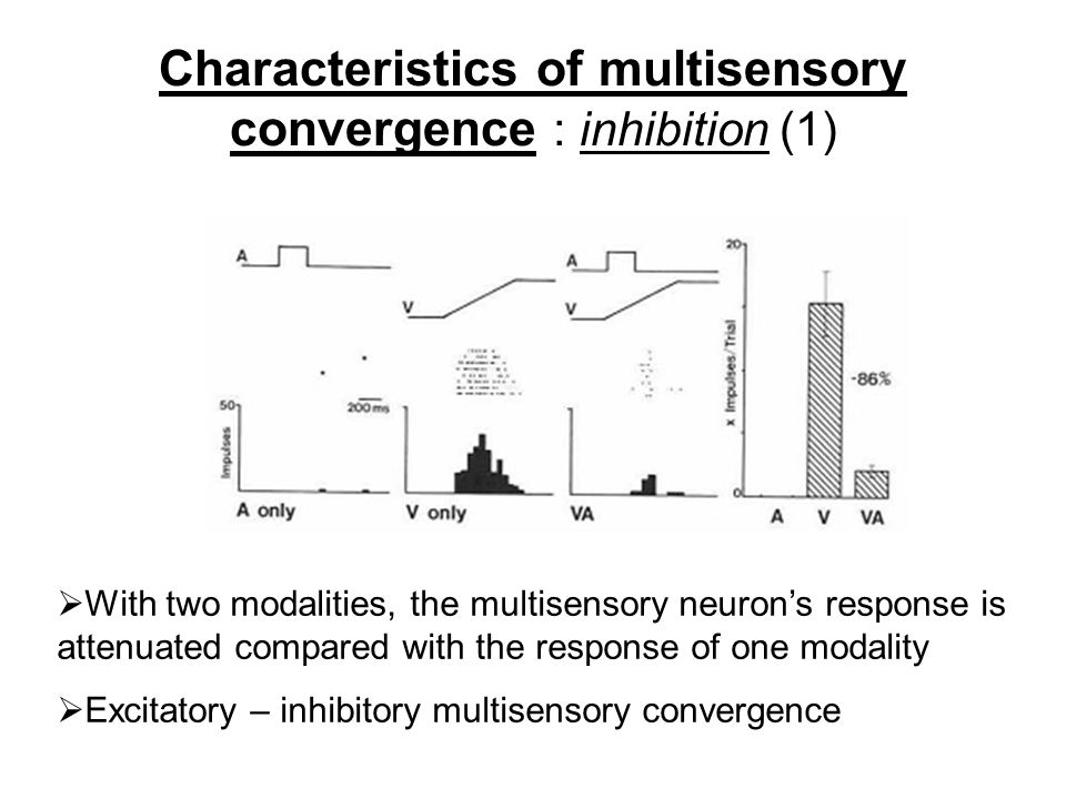 Characteristics of multisensory convergence : inhibition (1)  With two modalities, the multisensory neuron's response is attenuated compared with the response of one modality  Excitatory – inhibitory multisensory convergence