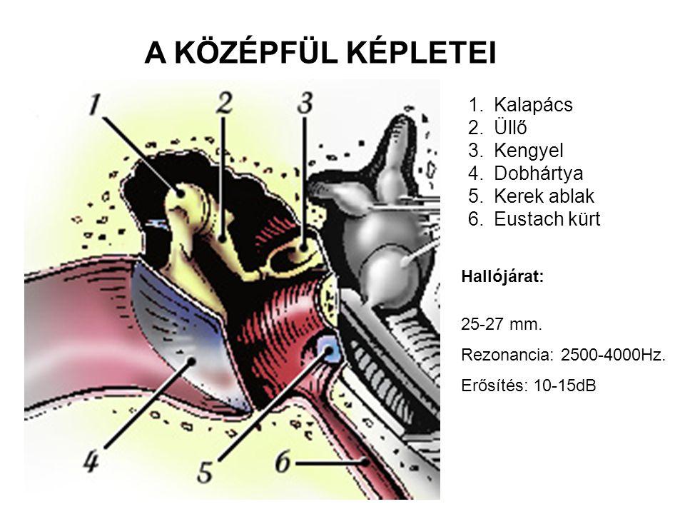 1.Kalapács 2.Üllő 3.Kengyel 4.Dobhártya 5.Kerek ablak 6.Eustach kürt A KÖZÉPFÜL KÉPLETEI Hallójárat: 25-27 mm. Rezonancia: 2500-4000Hz. Erősítés: 10-1