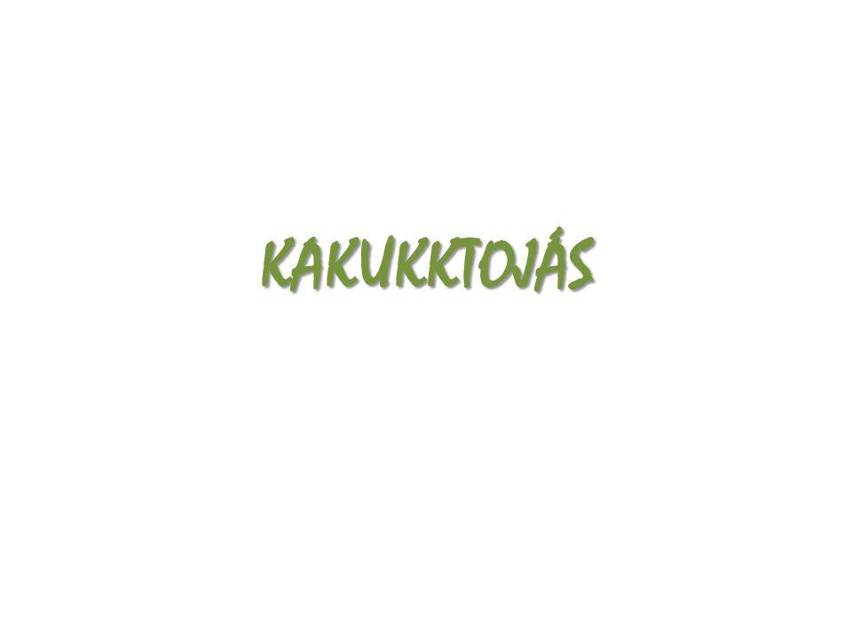 KAKUKKTOJÁS