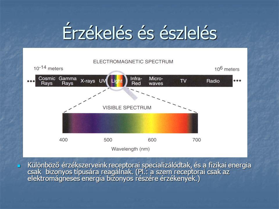 Érzékelés és észlelés Különböző érzékszerveink receptorai specializálódtak, és a fizikai energia csak bizonyos típusára reagálnak. (Pl.: a szem recept