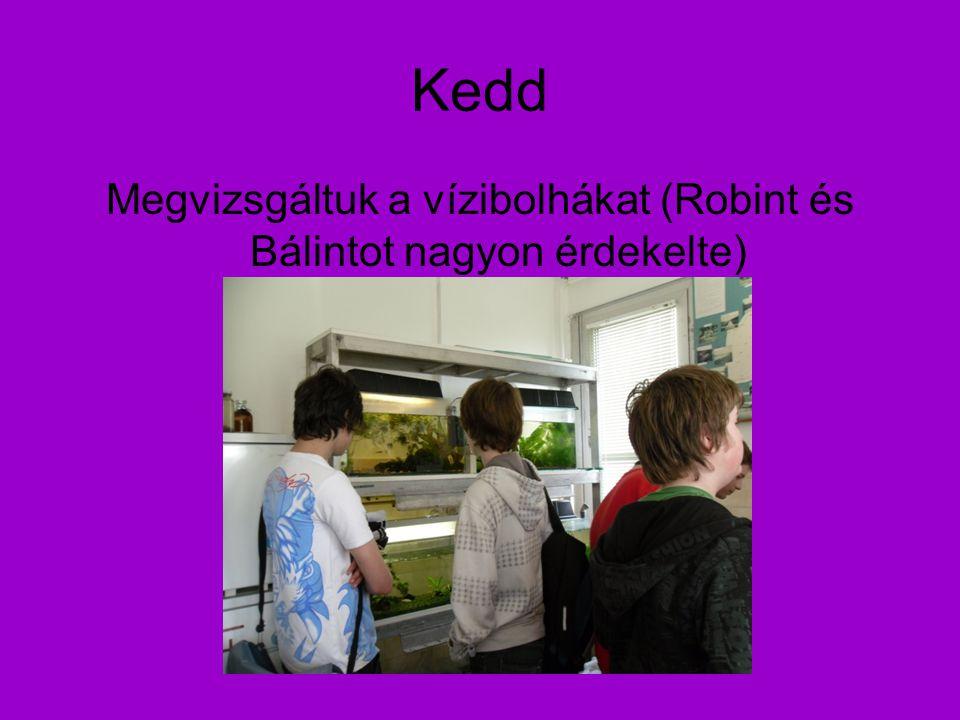 Kedd Megvizsgáltuk a vízibolhákat (Robint és Bálintot nagyon érdekelte)