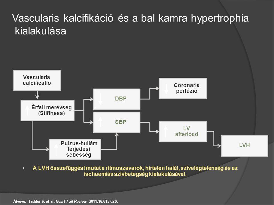 Vascularis kalcifikáció és a bal kamra hypertrophia kialakulása Átvéve: Taddei S, et al. Heart Fail Review. 2011;16:615-620. A LVH összefüggést mutat
