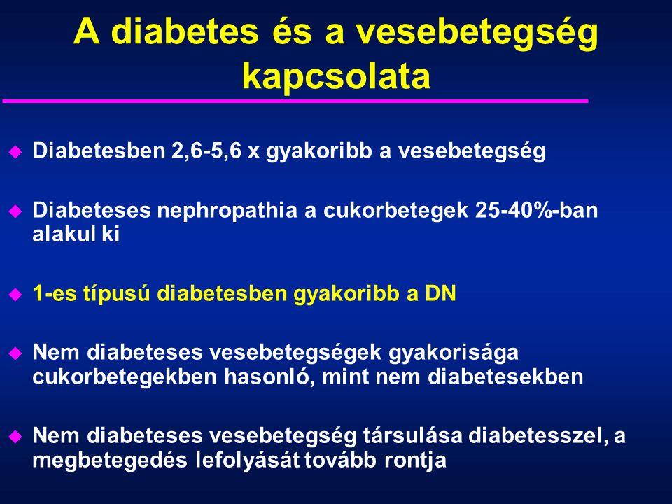 A diabetes és a vesebetegség kapcsolata u Diabetesben 2,6-5,6 x gyakoribb a vesebetegség u Diabeteses nephropathia a cukorbetegek 25-40%-ban alakul ki