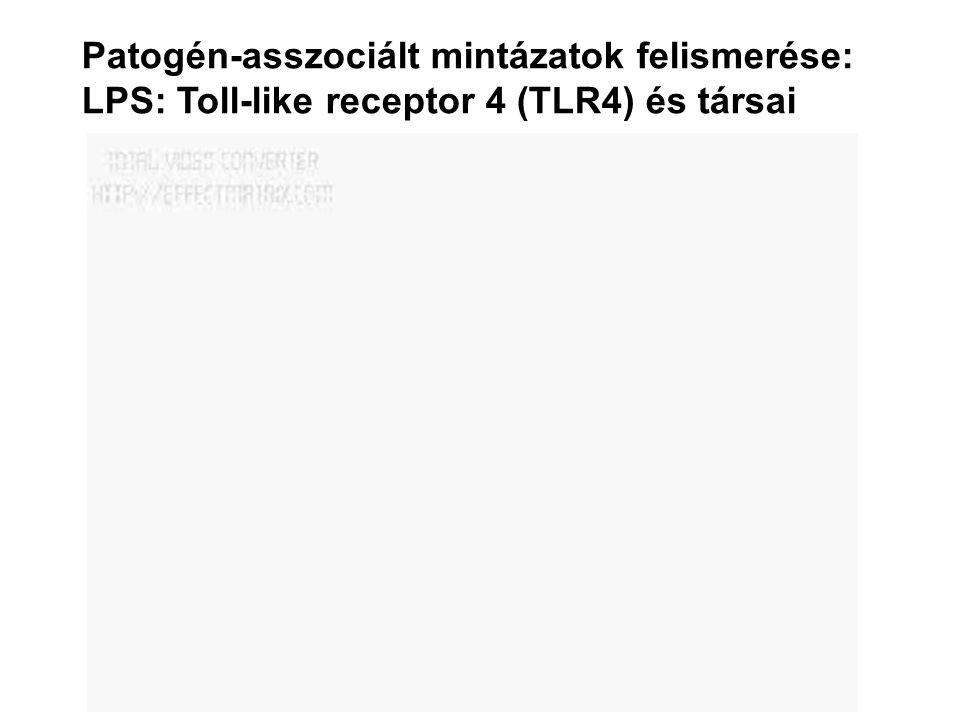 Patogén-asszociált mintázatok felismerése: LPS: Toll-like receptor 4 (TLR4) és társai