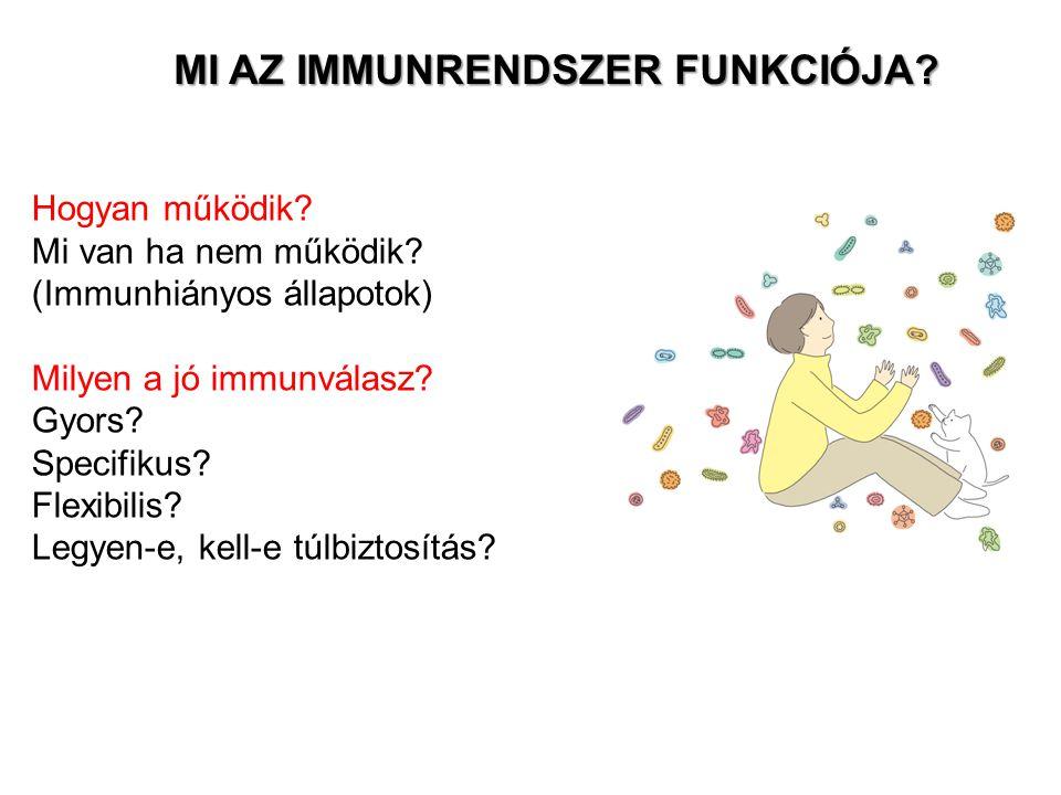 MONOCITÁK eredet: csontvelői pluripotens előalakok mieloid progenitor méret: 10-15um sejtmag: bab alakú lokalizáció:keringésben keringésből kilépve: makrofág SZÖVETI - TESTÜREGI MAKROFÁGOK fagocitáló sejtek hivatásos antigénprezentáló sejtek (APC) fő típusaik (szöveti lokalizáció alapján): a)mikroglia (agy) b)Kuppfer-sejtek (máj) c)hisztiociták (kötőszövet) d)oszteoklasztok (csont) e)alveoláris makrofágok (tüdő) funkció: celluláris és humorális immunválaszban egyaránt