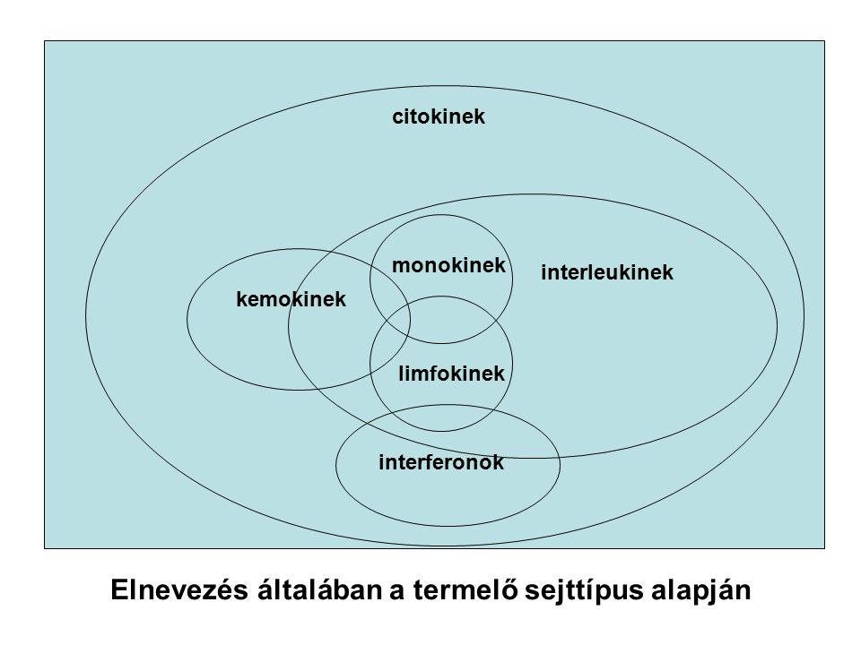citokinek kemokinek interleukinek monokinek limfokinek interferonok Elnevezés általában a termelő sejttípus alapján