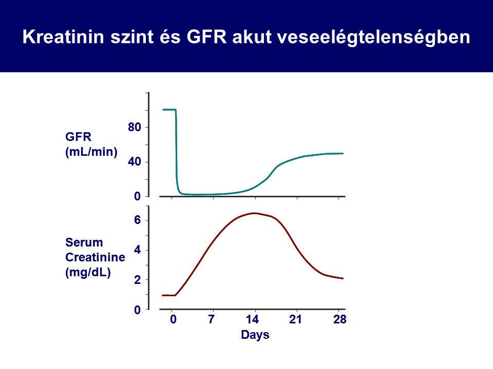 40 80 0 GFR (mL/min) 07142128 4 Days 2 0 6 Serum Creatinine (mg/dL) Kreatinin szint és GFR akut veseelégtelenségben 40 80 0 GFR (mL/min) 07142128 4 Days 2 0 6 Serum Creatinine (mg/dL)