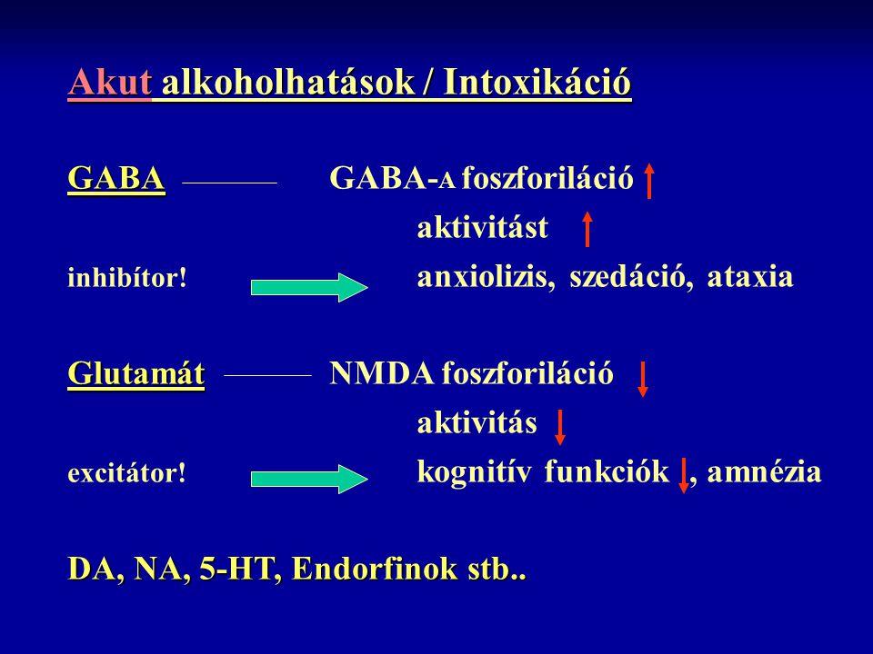 Akut alkoholhatások / Intoxikáció GABA GABAGABA- A foszforiláció aktivitást inhibítor! anxiolizis, szedáció, ataxia Glutamát GlutamátNMDA foszforiláci
