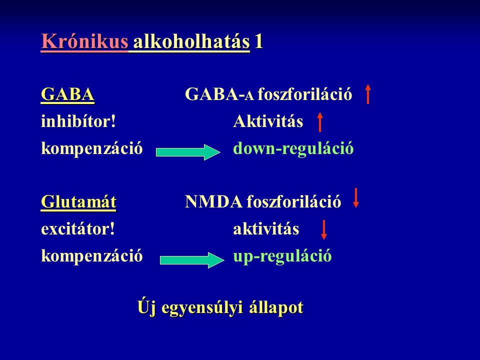 Krónikus alkoholhatás 1 GABA GABAGABA- A foszforiláció inhibítor! Aktivitás kompenzációdown-reguláció Glutamát GlutamátNMDA foszforiláció excitátor! a