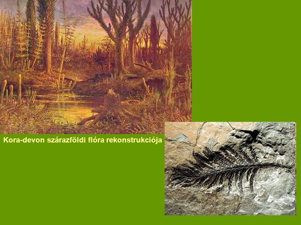 Kora-devon szárazföldi flóra rekonstrukciója