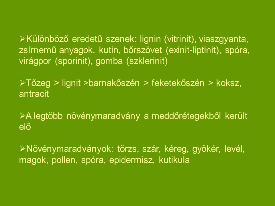  Különböző eredetű szenek: lignin (vitrinit), viaszgyanta, zsírnemű anyagok, kutin, bőrszövet (exinit-liptinit), spóra, virágpor (sporinit), gomba (s