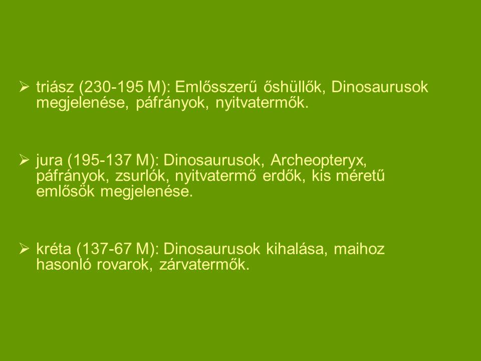  triász (230-195 M): Emlősszerű őshüllők, Dinosaurusok megjelenése, páfrányok, nyitvatermők.  jura (195-137 M): Dinosaurusok, Archeopteryx, páfrányo