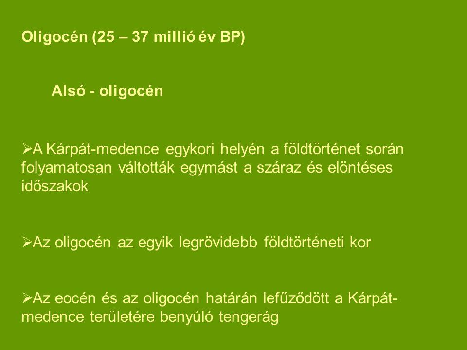 Oligocén (25 – 37 millió év BP)  A Kárpát-medence egykori helyén a földtörténet során folyamatosan váltották egymást a száraz és elöntéses időszakok