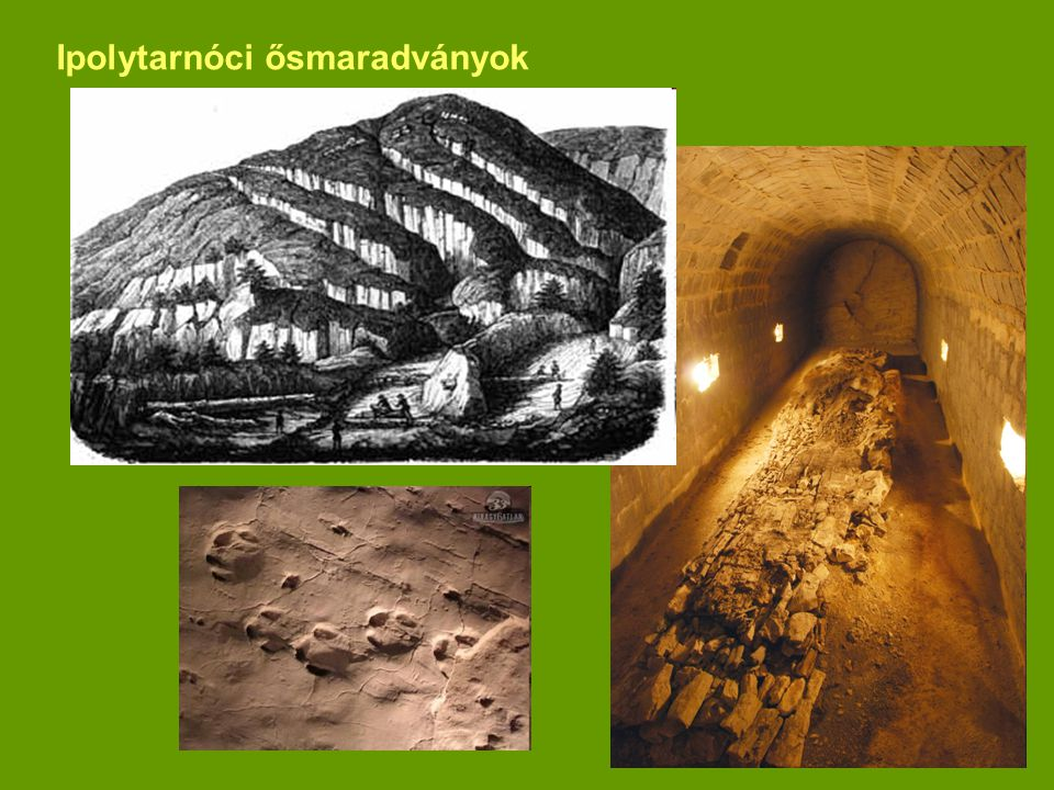 Ipolytarnóci ősmaradványok