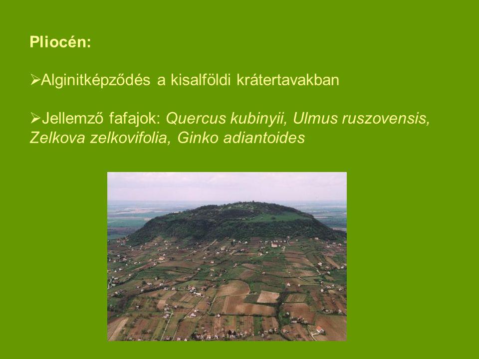 Pliocén:  Alginitképződés a kisalföldi krátertavakban  Jellemző fafajok: Quercus kubinyii, Ulmus ruszovensis, Zelkova zelkovifolia, Ginko adiantoide