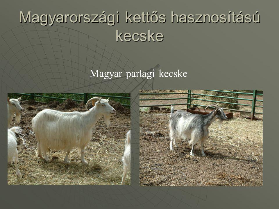 Magyarországi kettős hasznosítású kecske Magyar parlagi kecske