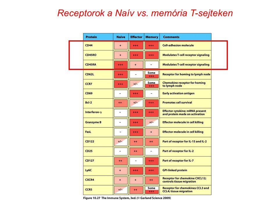 Receptorok a Naív vs. memória T-sejteken