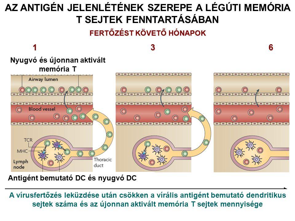 AZ ANTIGÉN JELENLÉTÉNEK SZEREPE A LÉGÚTI MEMÓRIA T SEJTEK FENNTARTÁSÁBAN FERTŐZÉST KÖVETŐ HÓNAPOK 136 Nyugvó és újonnan aktivált memória T Antigént be