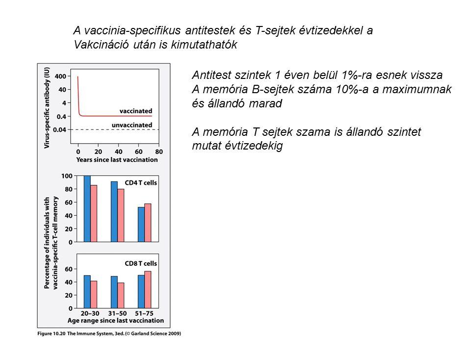 A vaccinia-specifikus antitestek és T-sejtek évtizedekkel a Vakcináció után is kimutathatók Antitest szintek 1 éven belül 1%-ra esnek vissza A memória