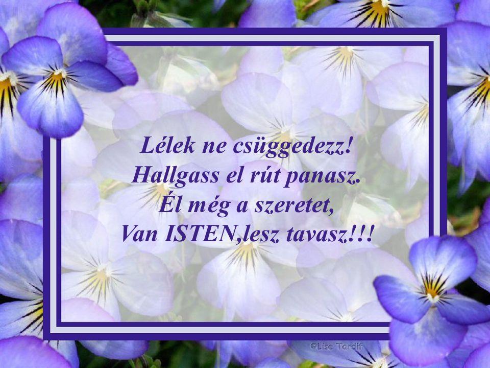 Lélek ne csüggedezz! Hallgass el rút panasz. Él még a szeretet, Van ISTEN,lesz tavasz!!!