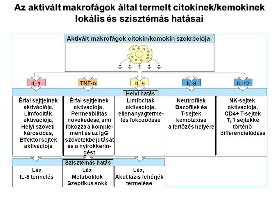 Az aktivált makrofágok által termelt citokinek/kemokinek lokális és szisztémás hatásai Szisztémás hatás Helyi hatás Aktivált makrofágok citokin/kemoki