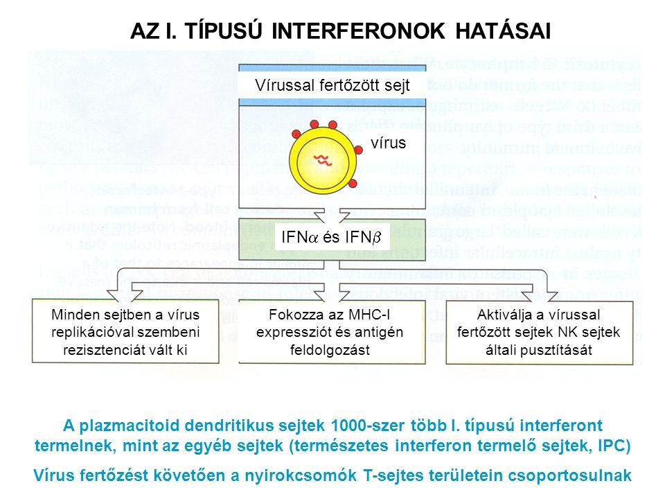 AZ I. TÍPUSÚ INTERFERONOK HATÁSAI A plazmacitoid dendritikus sejtek 1000-szer több I. típusú interferont termelnek, mint az egyéb sejtek (természetes