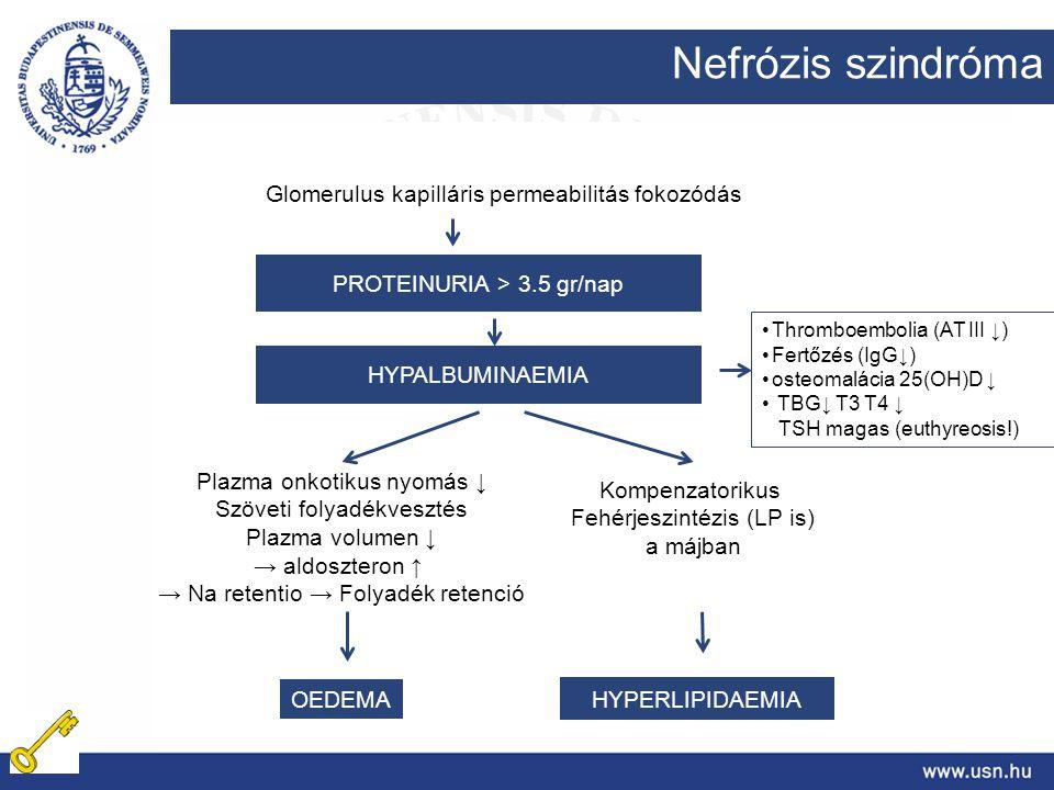 Nefrózis szindróma Glomerulus kapilláris permeabilitás fokozódás PROTEINURIA > 3.5 gr/nap HYPALBUMINAEMIA Plazma onkotikus nyomás ↓ Szöveti folyadékve