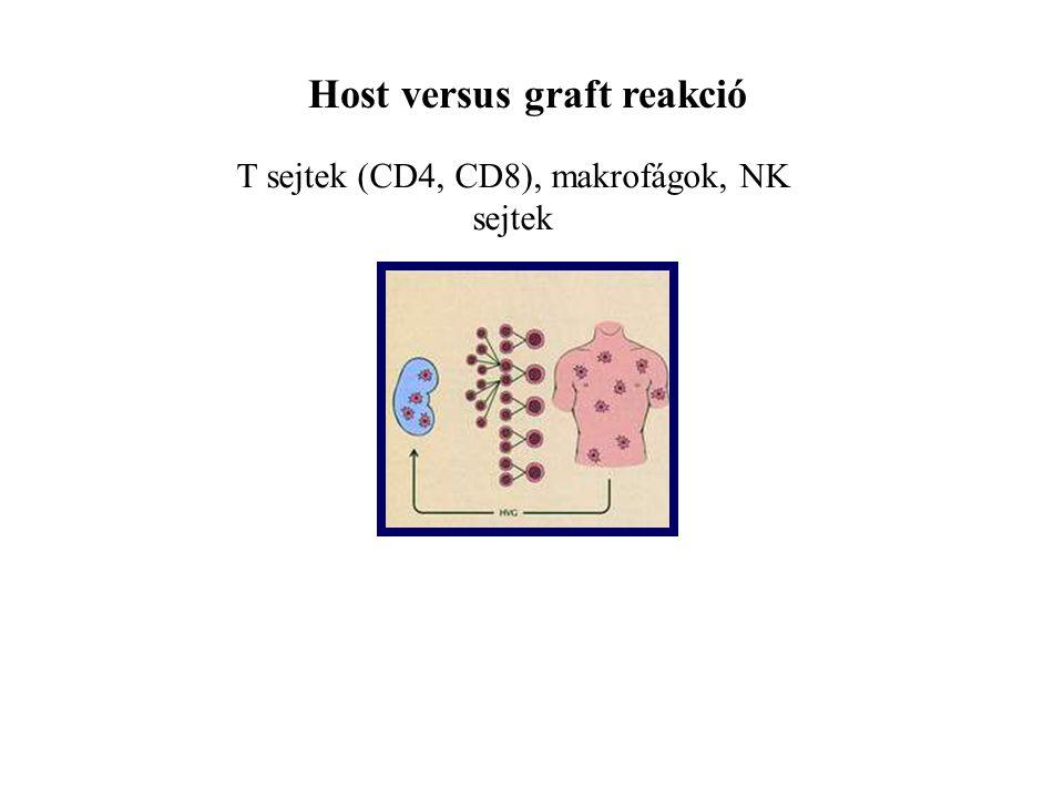 Host versus graft reakció T sejtek (CD4, CD8), makrofágok, NK sejtek