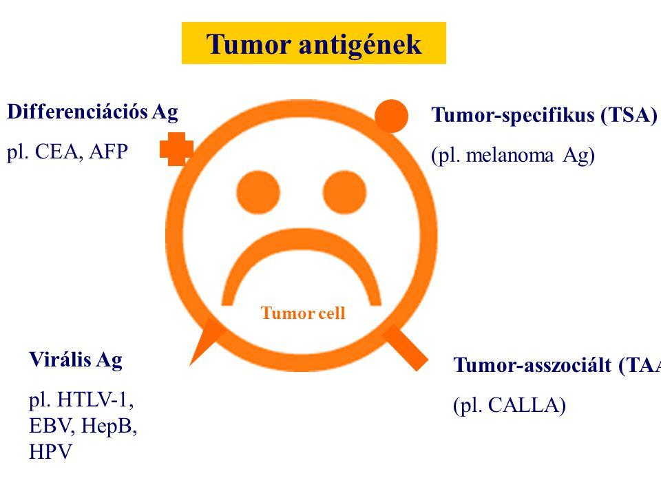 Tumor cell Tumor antigének Tumor-specifikus (TSA) (pl. melanoma Ag) Virális Ag pl. HTLV-1, EBV, HepB, HPV Tumor-asszociált (TAA) (pl. CALLA) Differenc