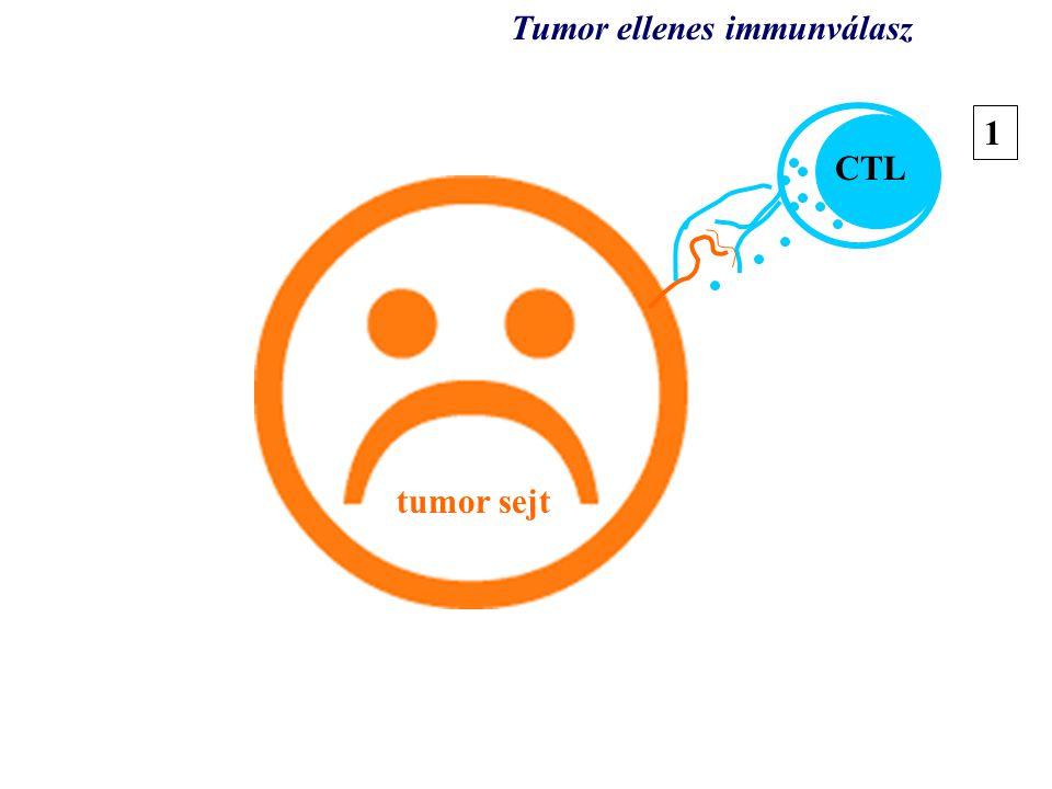 tumor tumor sejt CTL Tumor ellenes immunválasz 1