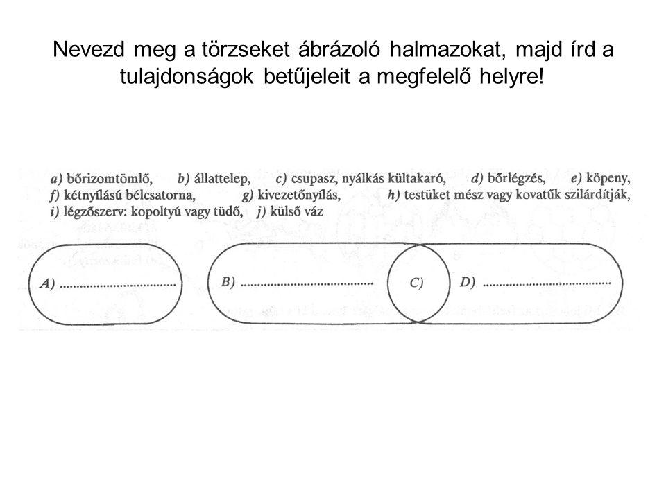 Nevezd meg a törzseket ábrázoló halmazokat, majd írd a tulajdonságok betűjeleit a megfelelő helyre!