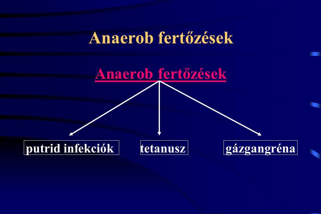 Anaerob fertőzések putrid infekciók tetanusz gázgangréna