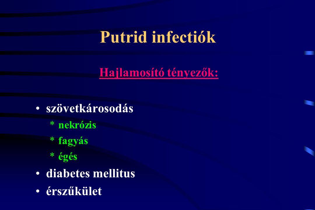 Putrid infectiók Hajlamosító tényezők: szövetkárosodás *nekrózis *fagyás *égés diabetes mellitus érszűkület
