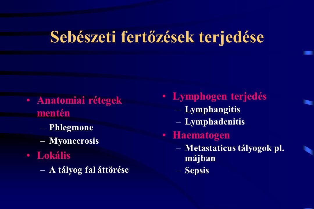 Sebészeti fertőzések szövődményei Fistula Elhúzódó sebgyógyulás Immunsuppressio Superinfectio Sepsis Septicus shock