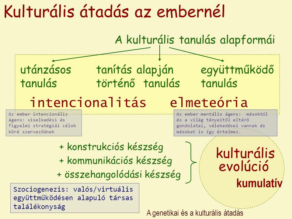 A genetikai és a kulturális átadás Kulturális átadás az embernél A kulturális tanulás alapformái utánzásos tanulás tanítás alapján történő tanulás egy