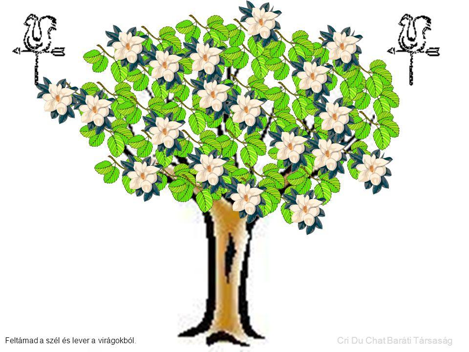 Feltámad a szél és lever a virágokból. Cri Du Chat Baráti Társaság